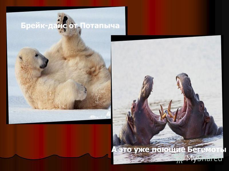 Брейк-данс от Потапыча А это уже поющие Бегемоты
