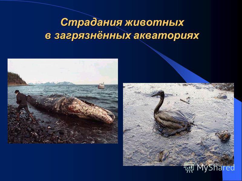 Страдания животных в загрязнённых акваториях