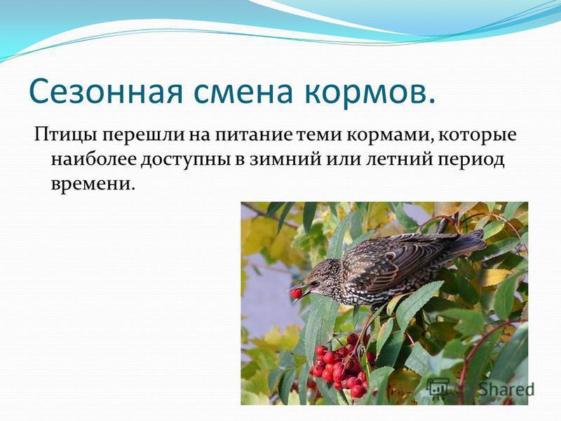 Сезонная смена кормов. Птицы перешли на питание теми кормами, которые наиболее доступны в зимний или летний период времени.