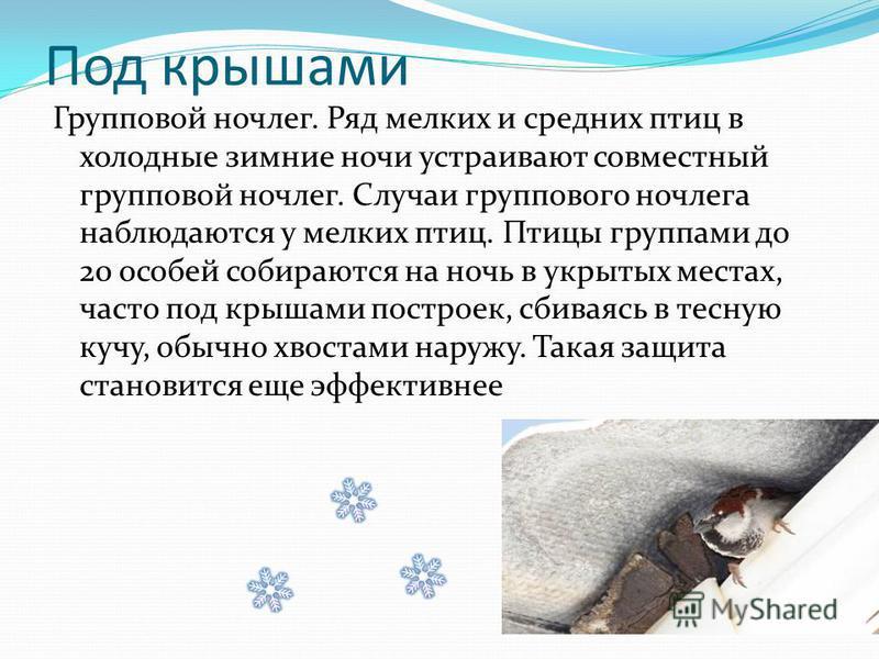 Под крышами Групповой ночлег. Ряд мелких и средних птиц в холодные зимние ночи устраивают совместный групповой ночлег. Случаи группового ночлега наблюдаются у мелких птиц. Птицы группами до 20 особей собираются на ночь в укрытых местах, часто под кры