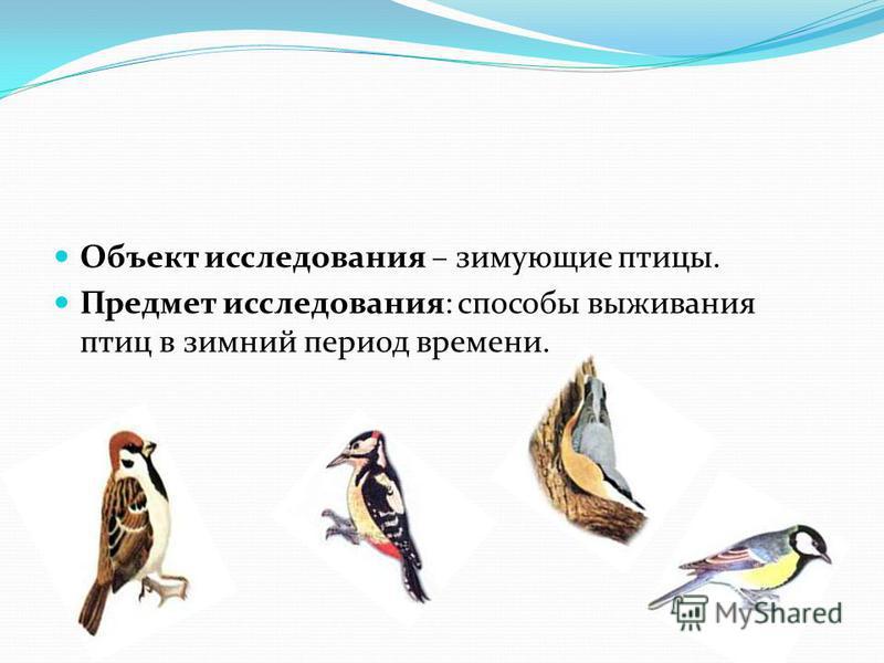 Объект исследования – зимующие птицы. Предмет исследования: способы выживания птиц в зимний период времени.