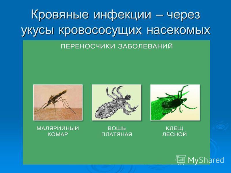 Кровяные инфекции – через укусы кровососущих насекомых