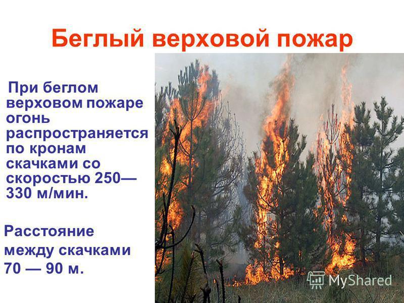 Беглый верховой пожар При беглом верховом пожаре огонь распространяется по кронам скачками со скоростью 250 330 м/мин. Расстояние между скачками 70 90 м.