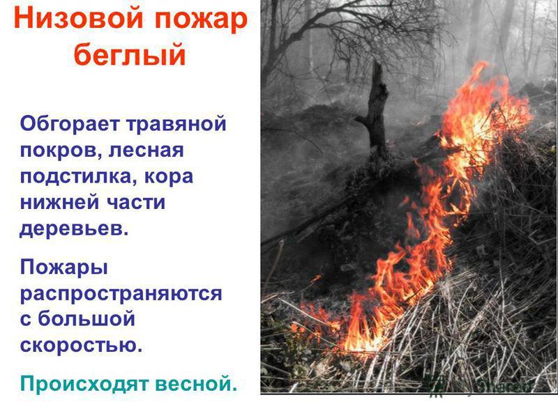 Низовой пожар беглый Обгорает травяной покров, лесная подстилка, кора нижней части деревьев. Пожары распространяются с большой скоростью. Происходят весной.