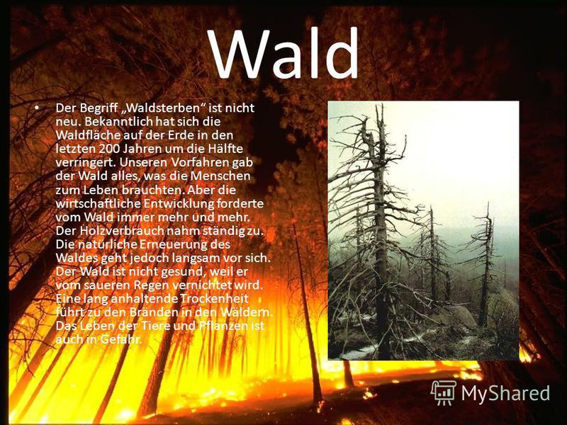 Wald Der Begriff Waldsterben ist nicht neu. Bekanntlich hat sich die Waldfläche auf der Erde in den letzten 200 Jahren um die Hälfte verringert. Unseren Vorfahren gab der Wald alles, was die Menschen zum Leben brauchten. Aber die wirtschaftliche Entw