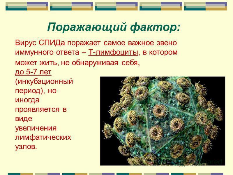 Вирус иммунодефицита человека (ВИЧ)) Ядро капсулы вируса содержит генетический материал РНК и три фермента, которые способствуют дублированию РНК при проникновении в соседнюю клетку Капсулы, выполняющие роль «связных» между клетками Протеиновая капсу