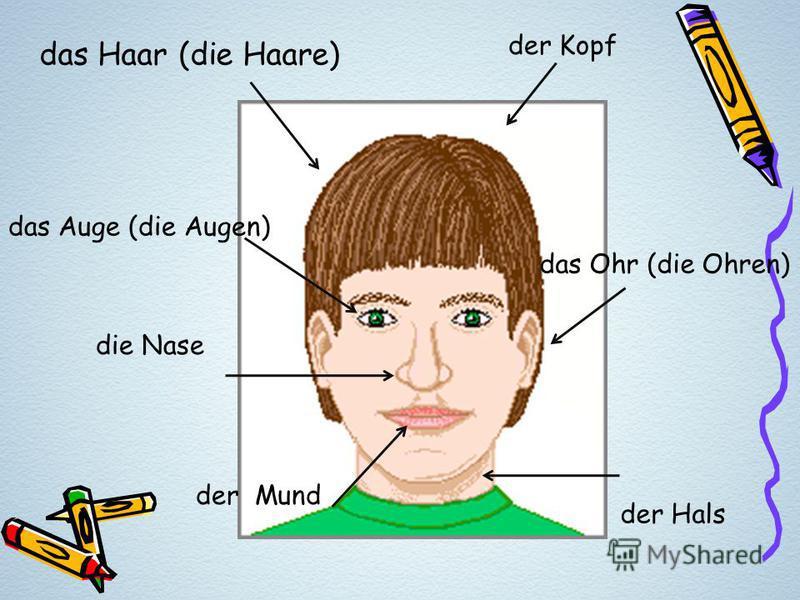 das Haar (die Haare) das Auge (die Augen) die Nase der Mund das Ohr (die Ohren) der Kopf der Hals