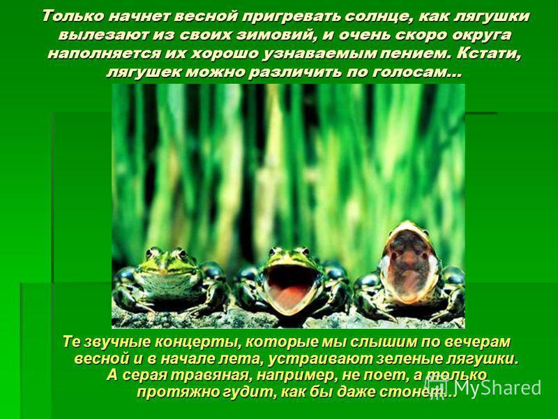 Только начнет весной пригревать солнце, как лягушки вылезают из своих зимовий, и очень скоро округа наполняется их хорошо узнаваемым пением. Кстати, лягушек можно различить по голосам… Те звучные концерты, которые мы слышим по вечерам весной и в нача