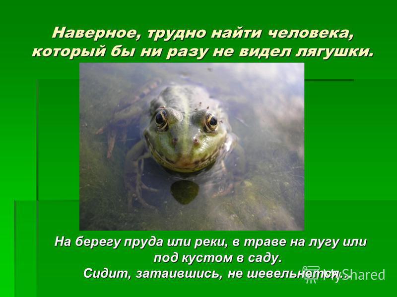 Наверное, трудно найти человека, который бы ни разу не видел лягушки. На берегу пруда или реки, в траве на лугу или под кустом в саду. Сидит, затаившись, не шевельнется…
