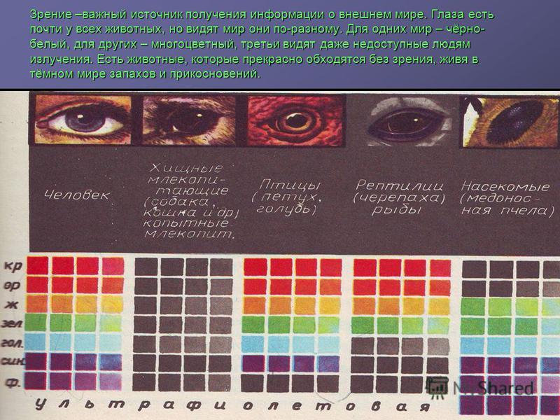 Зрение –важный источник получения информации о внешнем мире. Глаза есть почти у всех животных, но видят мир они по-разному. Для одних мир – чёрно- белый, для других – многоцветный, третьи видят даже недоступные людям излучения. Есть животные, которые