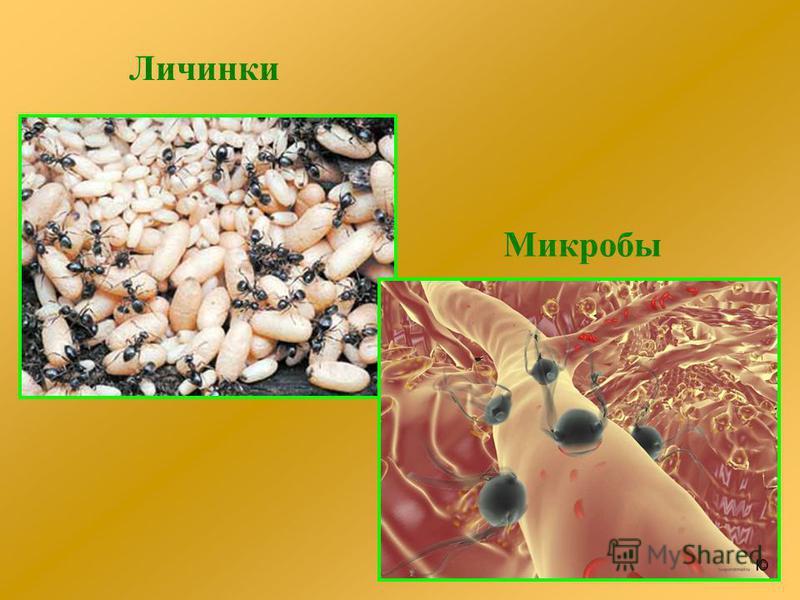 Личинки Микробы