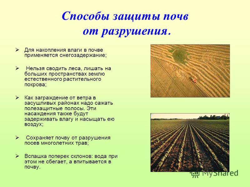 Способы защиты почв от разрушения. Для накопления влаги в почве применяется снегозадержание; Нельзя сводить леса, лишать на больших пространствах землю естественного растительного покрова; Как заграждение от ветра в засушливых районах надо сажать пол