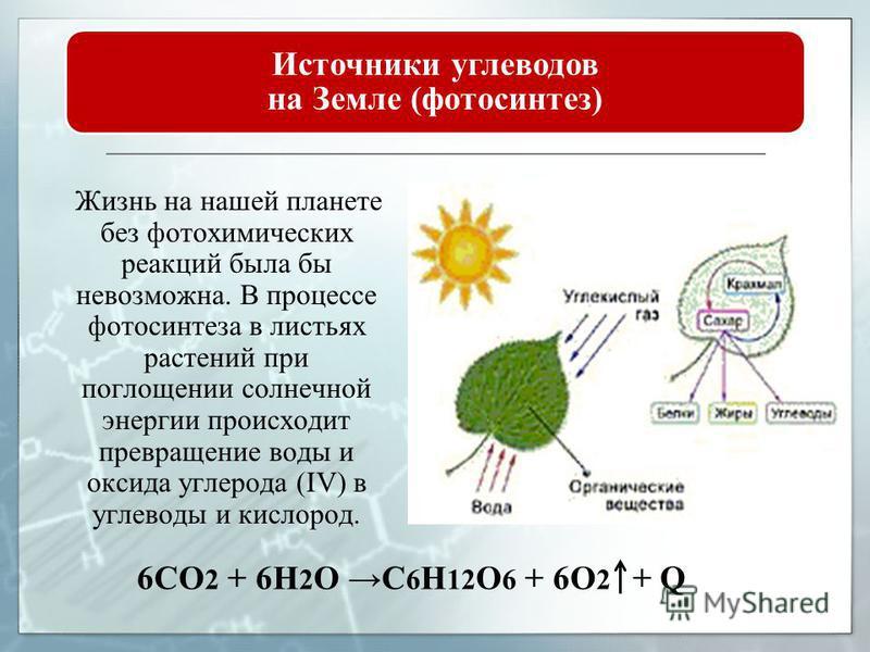 Энергетическая функция. Углевоты служат основным источником энергии для организма. Структурная функция. Во всех без исключения тканях и органах обнаружены углевоты и их производные. Они входят в состав оболочек клеток и субклеточных образований. Прин