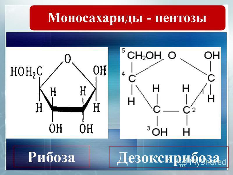 М О Н О С А Х А Р И Д Ы К моносахаридам относятся: Тетрозы С 4 Н 8 О 4 (элит роза треоза) Пентозы С 5 Н 10 О 5 (арабиноза, ксилоза, рибоза ) Гексозы С 6 Н 12 О 6 (глюкоза, манноза, галактоза, фруктоза) Простыми углеводами (моносахаридами и мономиноза