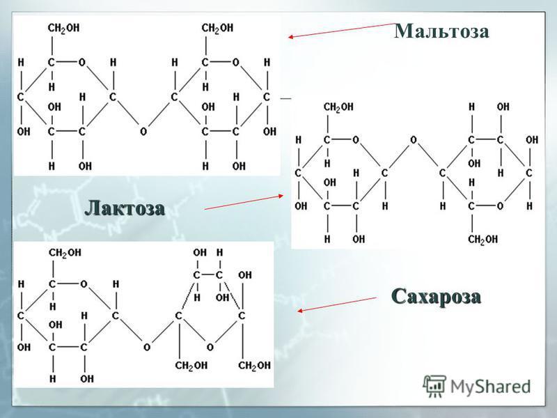 Мальтоза Лактоза Сахароза