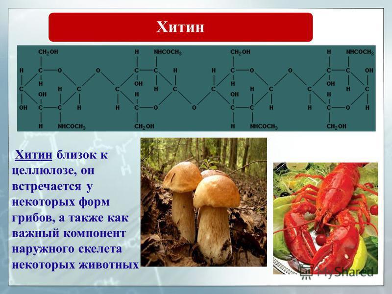 Хитин близок к целлюлозе, он встречается у некоторых форм грибов, а также как важный компонент наружного скелета некоторых животных Хитин