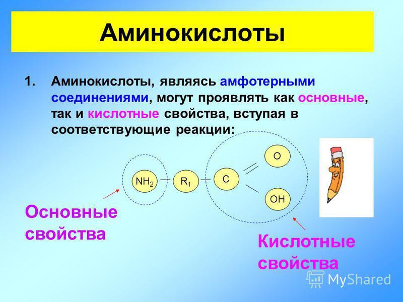 Аминокислоты 1.Аминокислоты, являясь амфотерными соединениями, могут проявлять как основные, так и кислотные свойства, вступая в соответствующие реакции: NH 2 R1R1 О OH Основные свойства Кислотные свойства C