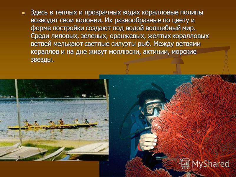 Здесь в теплых и прозрачных водах коралловые полипы возводят свои колонии. Их разнообразные по цвету и форме постройки создают под водой волшебный мир. Среди лиловых, зеленых, оранжевых, желтых коралловых ветвей мелькают светлые силуэты рыб. Между ве