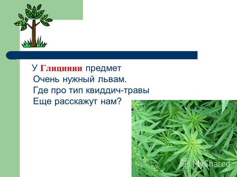 У Глицинии предмет Очень нужный львам. Где про тип квиддич-травы Еще расскажут нам?