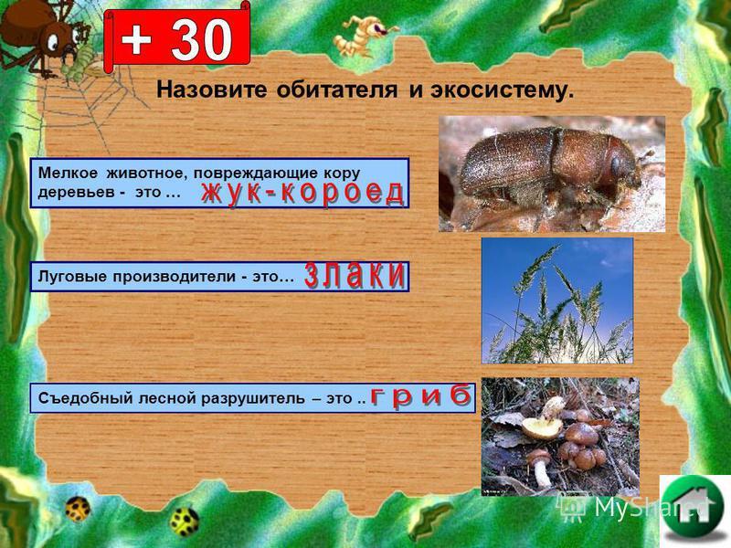 Назовите обитателя и экосистему. Мелкое животное, повреждающие кору деревьев - это … Луговые производители - это… Съедобный лесной разрушитель – это..