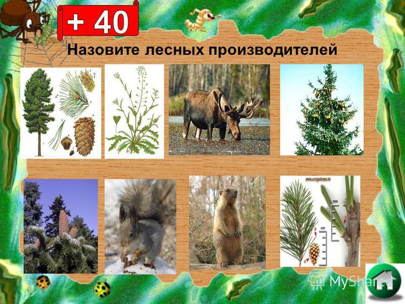 Назовите лесных производителей