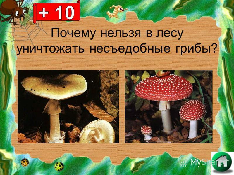 Почему нельзя в лесу уничтожать несъедобные грибы?