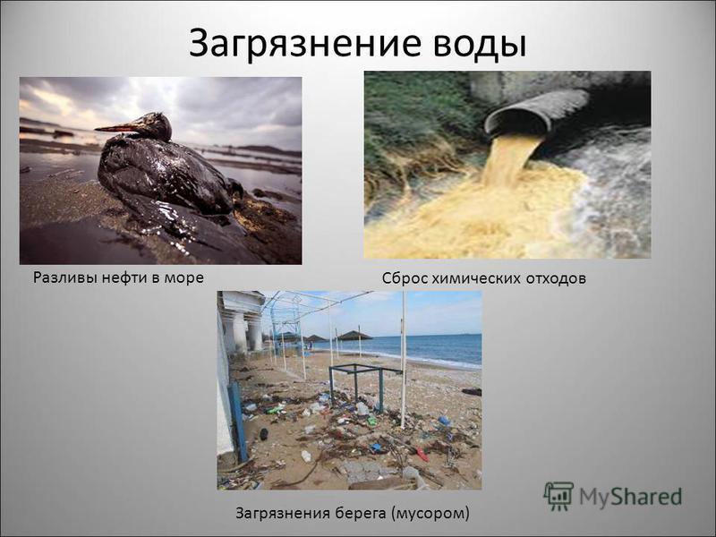 Загрязнение воды Разливы нефти в море Сброс химических отходов Загрязнения берега (мусором)