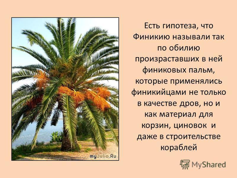 Есть гипотеза, что Финикию называли так по обилию произраставших в ней финиковых пальм, которые применялись финикийцами не только в качестве дров, но и как материал для корзин, циновок и даже в строительстве кораблей