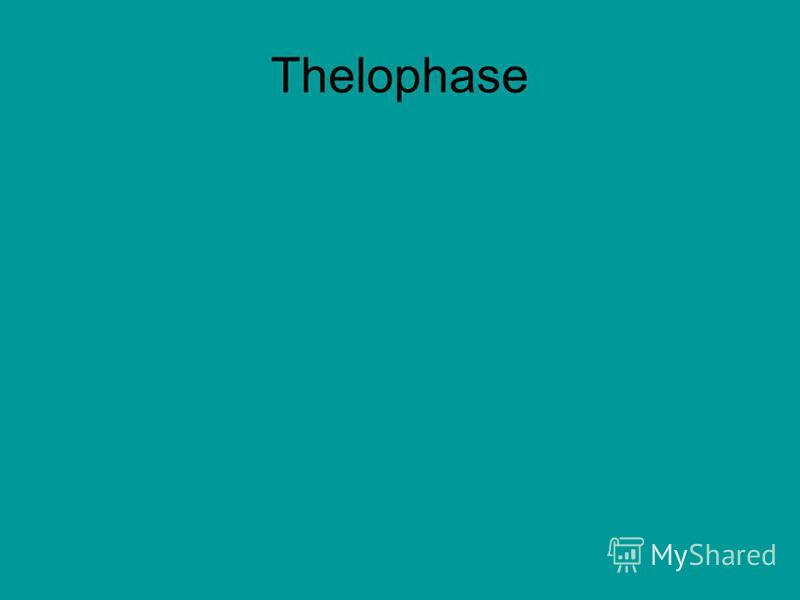 Thelophase