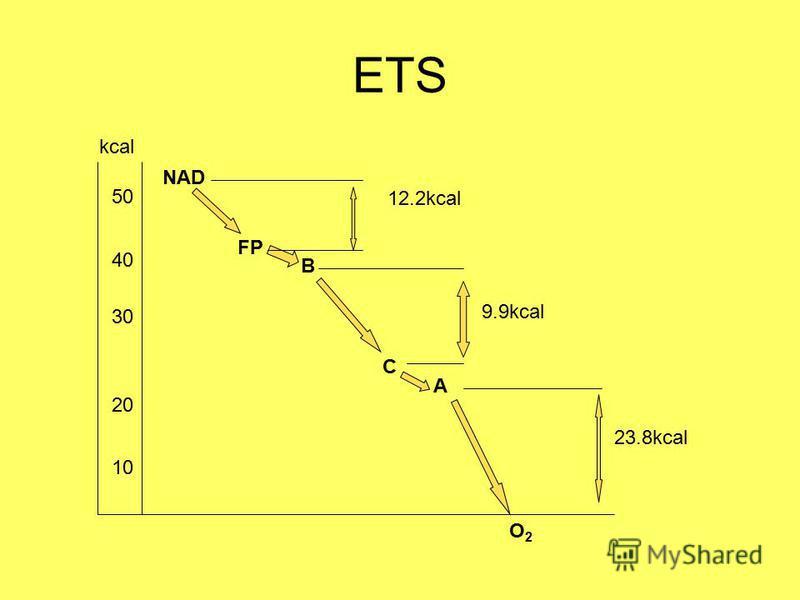 ETS NAD FP B C A O2O2 12.2kcal 9.9kcal 23.8kcal 50 40 30 20 10 kcal