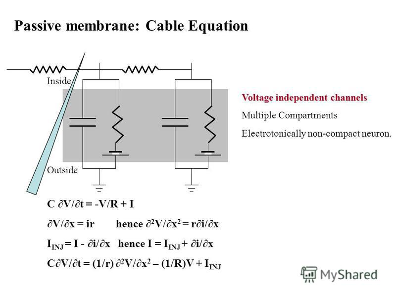 Passive membrane: Cable Equation Voltage independent channels Multiple Compartments Electrotonically non-compact neuron. C V/t = -V/R + I V/x = ir hence 2 V/x 2 = ri/x I INJ = I - i/x hence I = I INJ + i/x CV/t = (1/r) 2 V/x 2 – (1/R)V + I INJ Inside