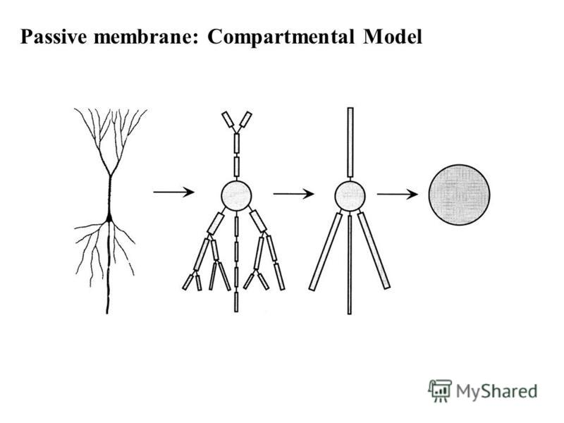 Passive membrane: Compartmental Model