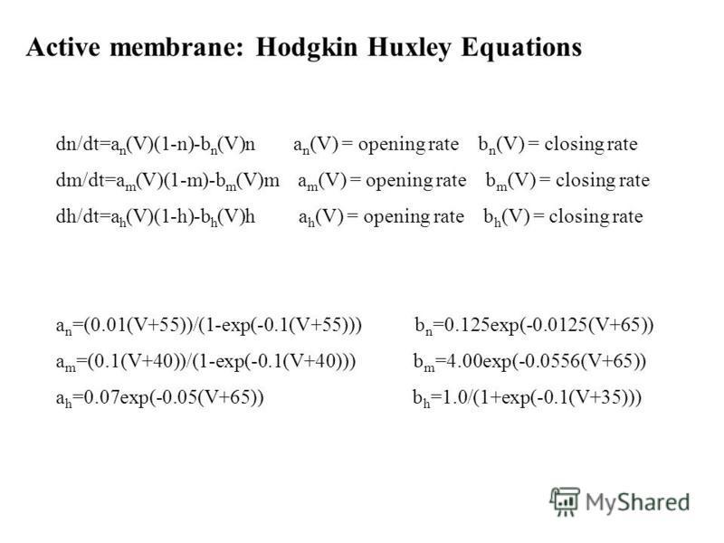 Active membrane: Hodgkin Huxley Equations dn/dt=a n (V)(1-n)-b n (V)n a n (V) = opening rate b n (V) = closing rate dm/dt=a m (V)(1-m)-b m (V)m a m (V) = opening rate b m (V) = closing rate dh/dt=a h (V)(1-h)-b h (V)h a h (V) = opening rate b h (V) =