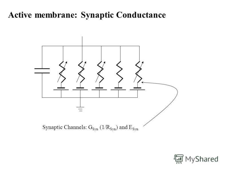 Active membrane: Synaptic Conductance Synaptic Channels: G Syn (1/R Syn ) and E Syn