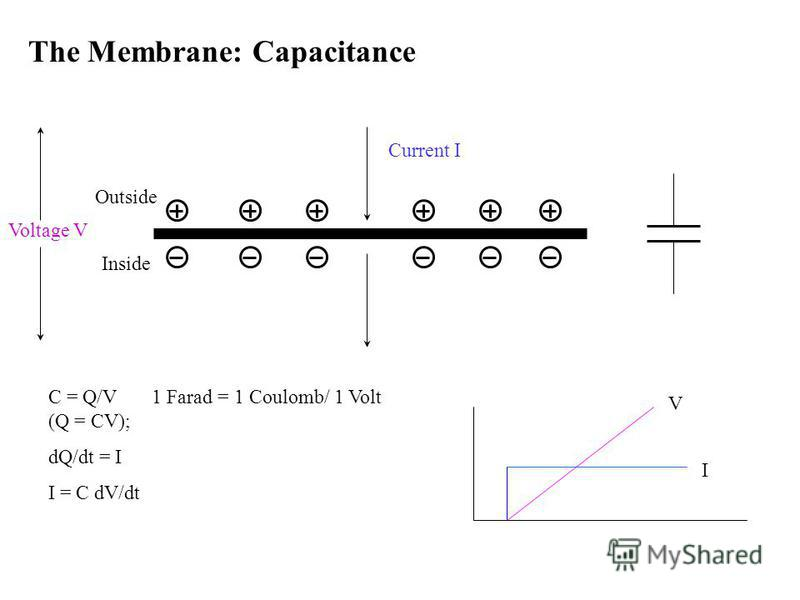 The Membrane: Capacitance Current I C = Q/V 1 Farad = 1 Coulomb/ 1 Volt (Q = CV); dQ/dt = I I = C dV/dt Outside InsideI V Voltage V