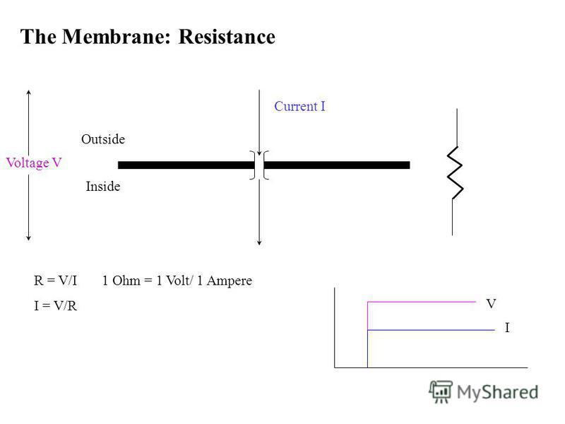 The Membrane: Resistance Current I R = V/I 1 Ohm = 1 Volt/ 1 Ampere I = V/R Outside Inside I V Voltage V