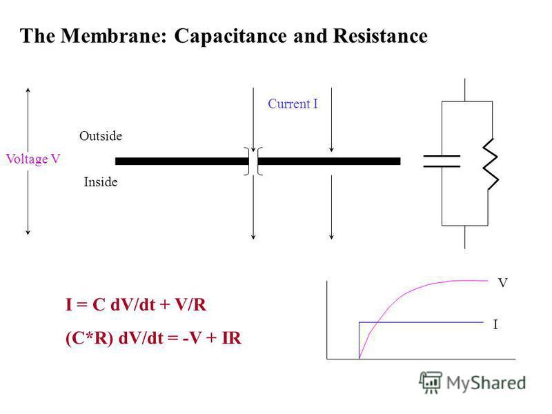 The Membrane: Capacitance and Resistance Current I I = C dV/dt + V/R (C*R) dV/dt = -V + IR Outside Inside I V Voltage V
