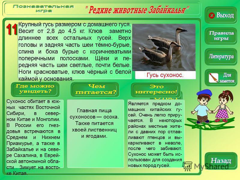 Гусь сухонос. Сухонос обитает в юж- ных частях Восточной Сибири, в север- ном Китае и Монголии. В России его гнез- довья встречаются в Среднем и Нижнем Приамурье, а также в Забайкалье и на севе- ре Сахалина, в Еврей- ской автономной обла- сти. Зимует
