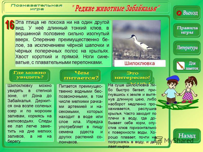 Шилоклювку можно увидеть в степной зоне, от Дона до Забайкалья. Держит- ся она возле соленых озер и по морским заливам, кормясь на мелководьях. Следы ее лап легче заме- тить на дне мелких заливов, а не на берегу. Питается преимущес- твенно водными бе