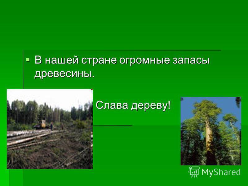 В нашей стране огромные запасы древесины. В нашей стране огромные запасы древесины. Слава дереву! Слава дереву!