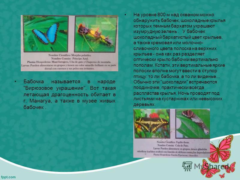 Бабочка называется в народе