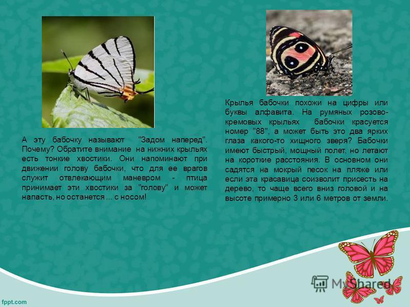 А эту бабочку называют