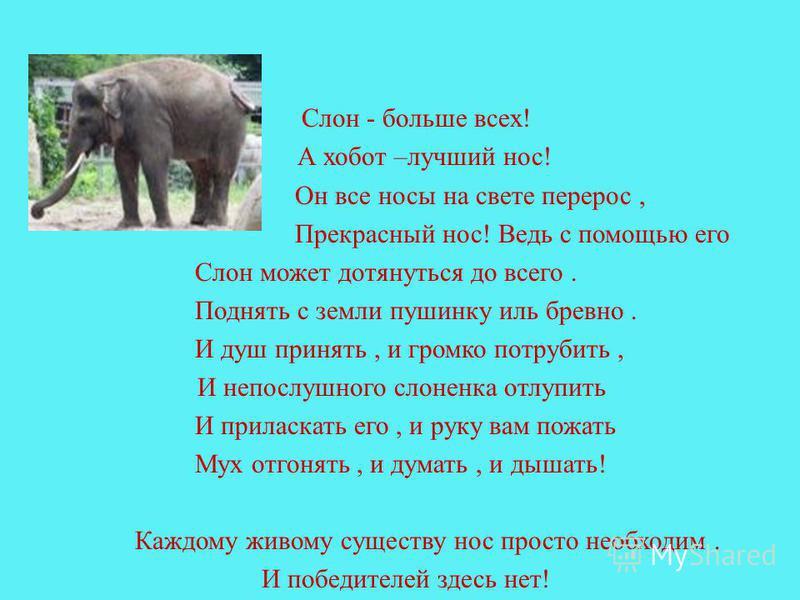 Слон - больше всех! А хобот –лучший нос! Он все носы на свете перерос, Прекрасный нос! Ведь с помощью его Слон может дотянуться до всего. Поднять с земли пушинку иль бревно. И душ принять, и громко потрубить, И непослушного слоненка отлупить И прилас
