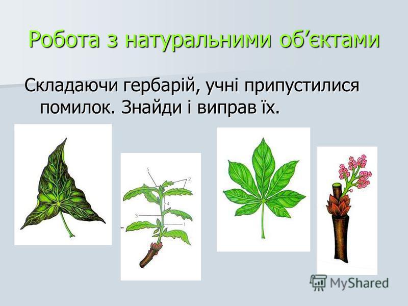 Робота з натуральними обєктами Складаючи гербарій, учні припустилися помилок. Знайди і виправ їх.