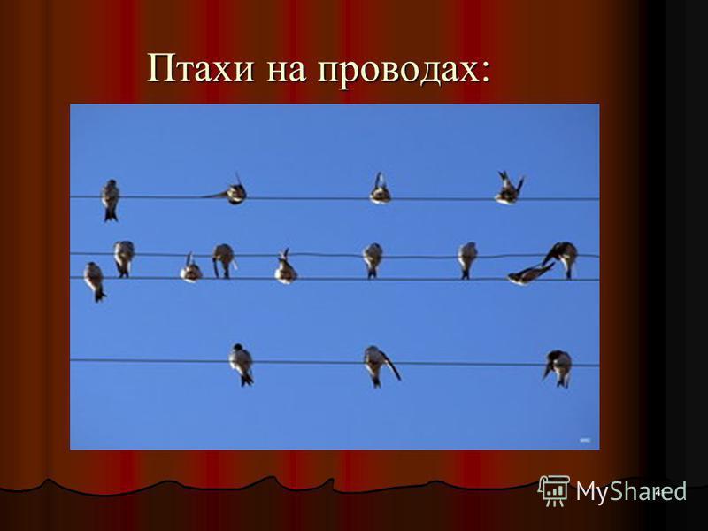 41 Птахи на проводах: