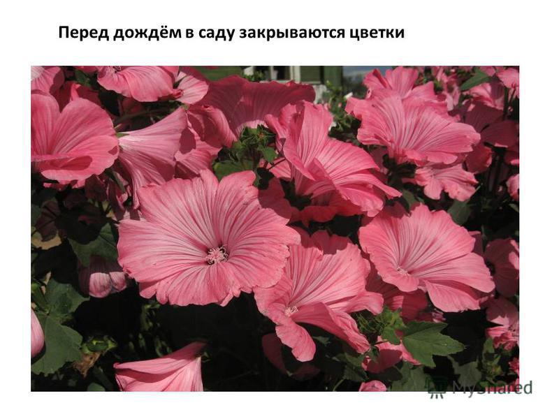 Перед дождём в саду закрываются цветки