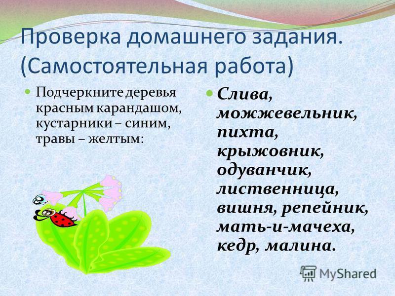Проверка домашнего задания. (Самостоятельная работа) Подчеркните деревья красным карандашом, кустарники – синим, травы – желтым: Слива, можжевельник, пихта, крыжовник, одуванчик, лиственница, вишня, репейник, мать-и-мачеха, кедр, малина.