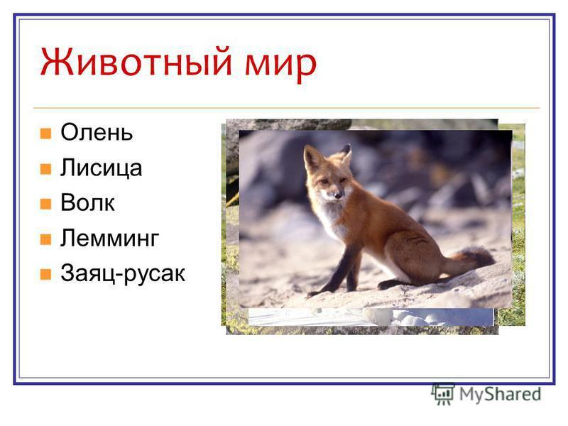 Животный мир Олень Лисица Волк Лемминг Заяц-русак