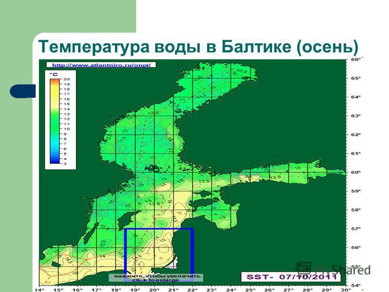 Температура воды в Балтике (осень)