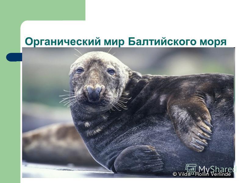 Органический мир Балтийского моря